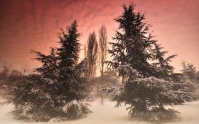 Картинка зима, лес, снег, деревья