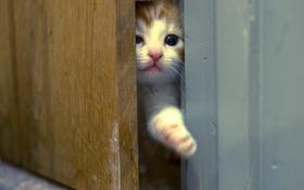 Обои кошка, фон, дверь