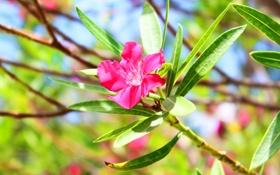 Обои листья, цветок, лепестки, ветка, дерево