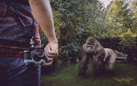 Картинка человек, ситуация, обезьяна
