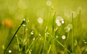 Картинка трава, роса, bokeh