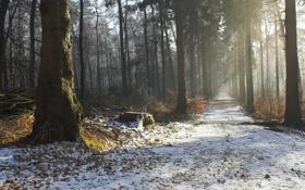 Картинка лес, парк, фото, тропа, аллея, первый снег