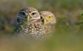 Картинка трава, птица, клюв, пара