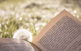 Обои лето, трава, текст, одуванчик, книга