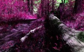 Обои лес, листья, деревья, цвет, полумрак