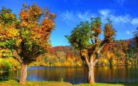 Картинка осень, лес, деревья, река, берег, листва, Германия