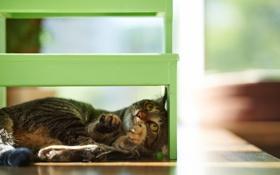 Картинка кошка, дом, игра, стул