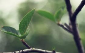 Обои ветки, ростки, дерево, ветви, литья, литочки