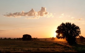 Картинка поле, лето, солнце, деревья, туман, восход, село