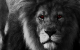 Картинка глаза, взгляд, хищник, лев, грива, царь зверей
