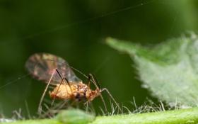 Обои листья, насекомое, боке, паутинка
