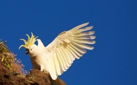 Картинка фон, птица, попугаи