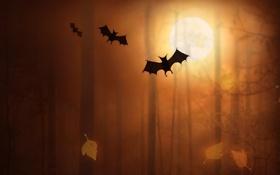 Обои лес, деревья, птицы, обои, летучая мышь, летучие мыши