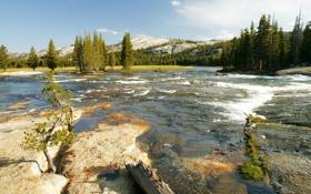Обои США, лес, течение, река, солнце, Йосемити, вода