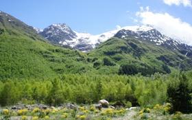 Картинка лес, облака, снег, деревья, природа, камень, гора