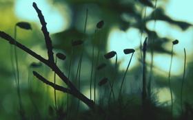 Обои ветки, мох, утро, бутоны