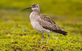 Обои птица, оперение, зелень, клюв, размытость