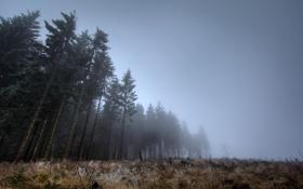 Картинка лес, туман, сумерки