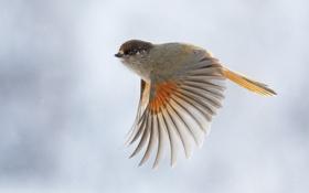 Обои полет, птица, крылья, перья, взмах