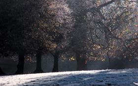 Обои зима, снег, деревья, фото, дерево, красота, зимние обои