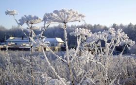 Обои зима, иней, растения, winter, snow