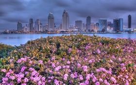 Картинка море, пейзаж, цветы, дома, вечер, сша, san diego
