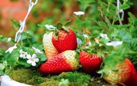 Картинка клубника, лето, ягоды