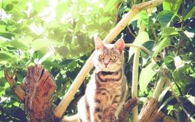 Обои глаза, кот, взгляд, листья, животное, растения, шерсть