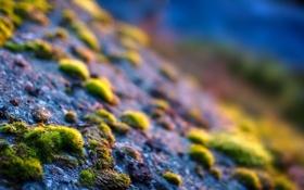 Картинка трава, макро, лучи, свет, природа, камни, фокус
