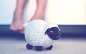 Обои подарок, игрушка, овечка, сувенир