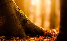 Обои природа, осень, листва, дерево