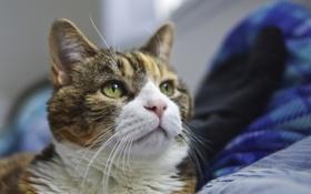 Картинка глаза, кот, зеленые, смотрит