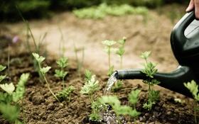 Обои грядка, растение, пряность, markus spiske, photographer, лейка, листья