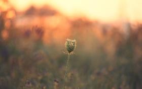 Картинка закат, растение, стебель, боке