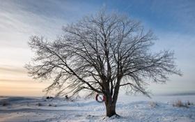 Картинка зима, дерево, спасательный круг