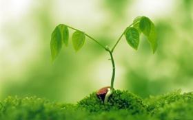 Картинка листья, росток, фокус, зелёный