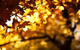 Обои листья, осень, Fire in the Sky