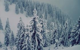Обои швецария, красиво, альпы, сосны, буран, Горы, елки