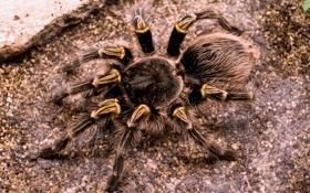 Обои legs, hair, Spider