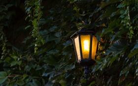 Обои свет, листва, фонарь, тени