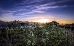 Обои небо, пейзаж, природа, утро, травы