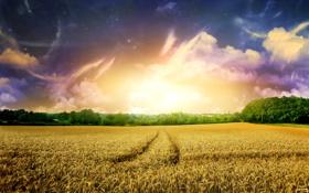 Картинка поле, небо, деревья, природа, рассвет, утро, горизонт