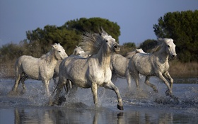Обои природа, река, кони