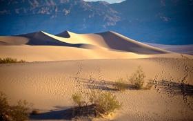Картинка пустыня, дюны, California, писок, Stove Pipe Wells