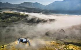 Картинка небо, туман, дерево, холмы, лошадь, поля, утро