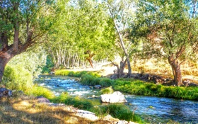 Обои лес, трава, солнце, деревья, ручей, камни, течение
