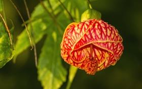 Обои листья, цветок, экзотика, лепестки, природа