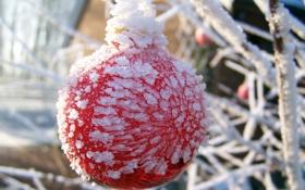 Обои лёд, ветки, плод, зима, снег, холод, фокус