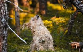 Картинка лес, друг, собака, пес