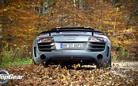 Обои Audi, листва, Ауди, Top Gear, суперкар, вид сзади, самая лучшая телепередача